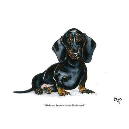 Bryn Parry Blank Greeting Card 'Miniature Smooth Haired Dachshund'