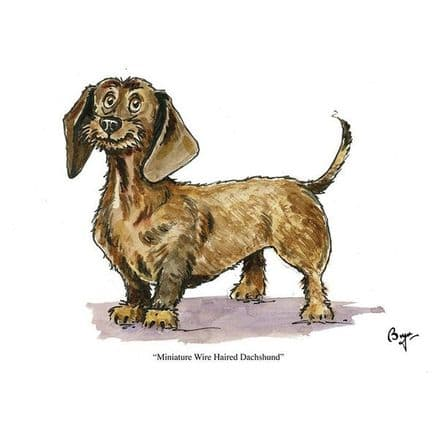 Bryn Parry Blank Greeting Card 'Miniature Wire Haired Dachshund'