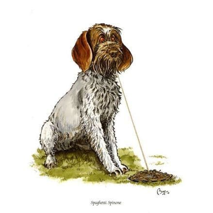 Bryn Parry Blank Greeting Card 'Spaghetti Spinone'