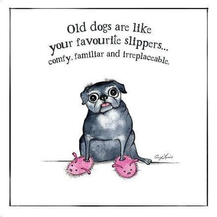 Dog Lovers Selection Cards Old Dogs