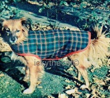 PDF Digital Download Vintage Instructional  Sewing Pattern Dog Coat Girth 19'' Length 16.5''