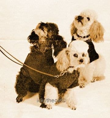 PDF Digital Download Vintage Knitting Pattern Dog Coats Small Dogs Adjustable DK / 8 ply