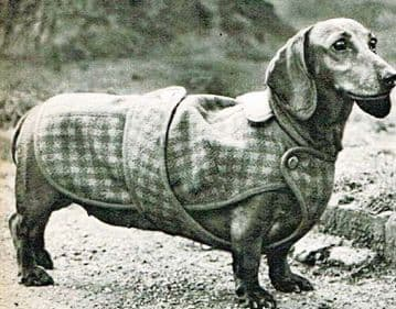 PDF Digital Vintage Chart Sewing Pattern  Classic Dog Coat for Dachshund Sausage Dog