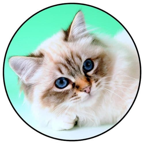 CAT 4x4 Spare Wheel Cover DECAL STICKER