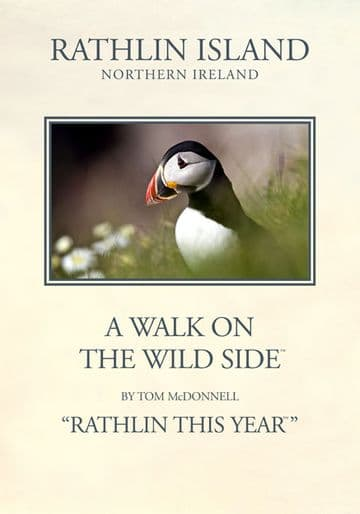 Atlantic Puffin, Rathlin Island. Vintage inspired Travel Poster by Tom McDonnell