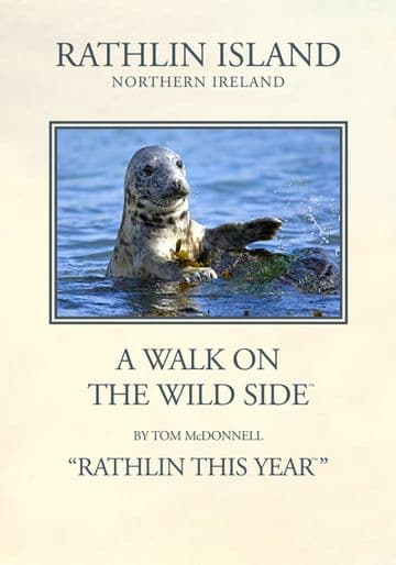 Grey Seal, Rathlin Island, Northern Ireland.  Vintage inspired Travel Poster