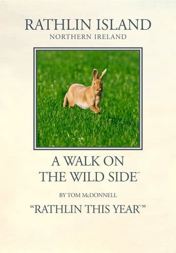 Irish Hare airborne, Rathlin Island, Northern Ireland.  Vintage inspired travel poster